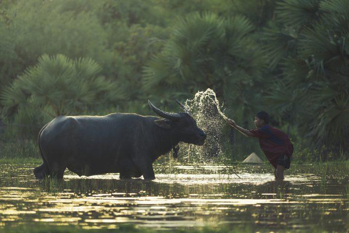 Green Cultural Travel - Cambodia - Mondulkiri - Kratie