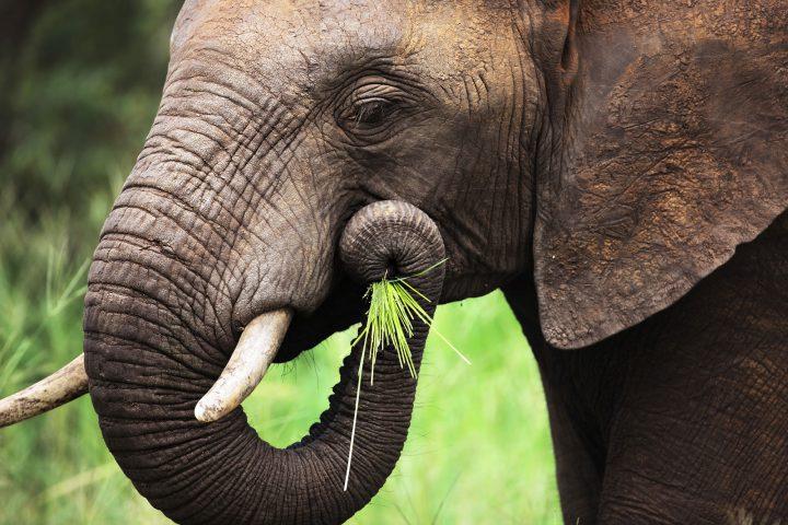 Green Cultural Travel - Cambodia - Mondulkiri - Elephants