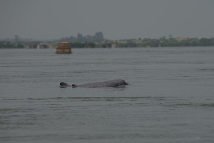 Green Cultural Travel - Cambodia - Tours - Mondulkiri - Kratie - Dolphin