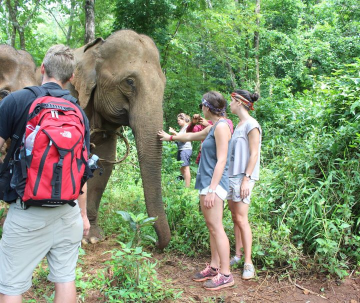 Green Cultural Travel - Cambodia - Mondulkiri - Elephants interacting with tourists