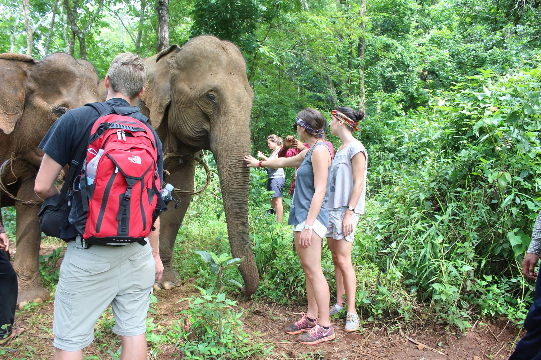 Green Cultural Travel - Cambodia - Mondulkiri - Elephants interacting with tourists
