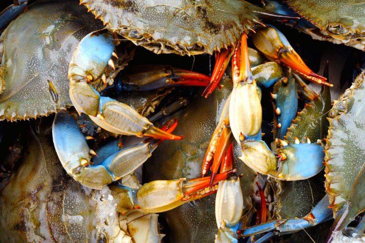 Green-Cultural-Travel - Cambodia - Kep - Crabs
